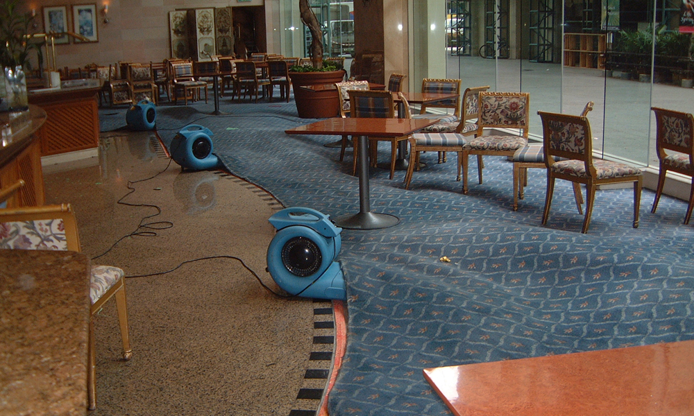 A dark blue carpet is drying at commercial place where wooden chairs and table is also placed with water extraction machinery